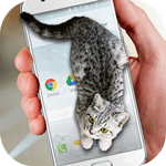 Cat Walks in Phone Cute Joke