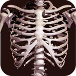 Osseous System 3D (анатомія)